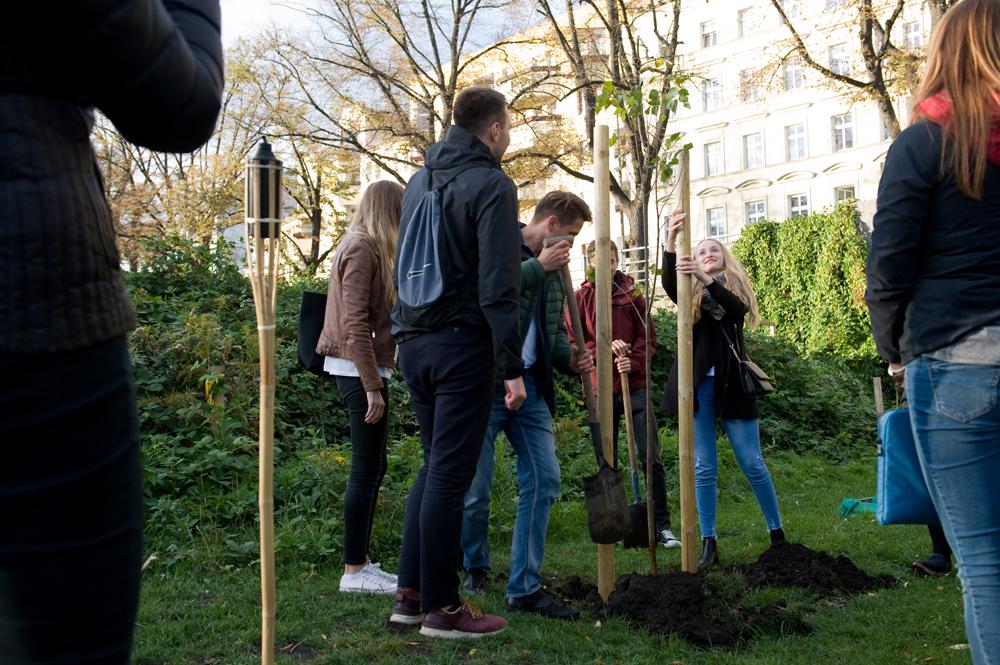 """Urodzinowe Pozycjonowanie Drzew w """"Formie Płynnej"""""""