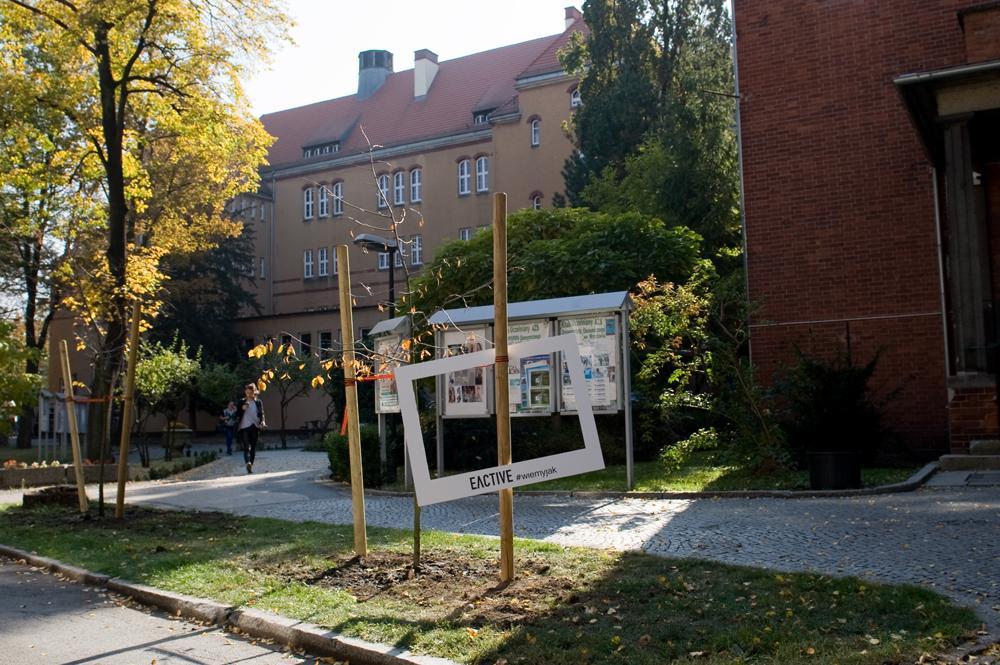 akademia_ekonomiczna_eactive_pozycjonowanie_drzew_33
