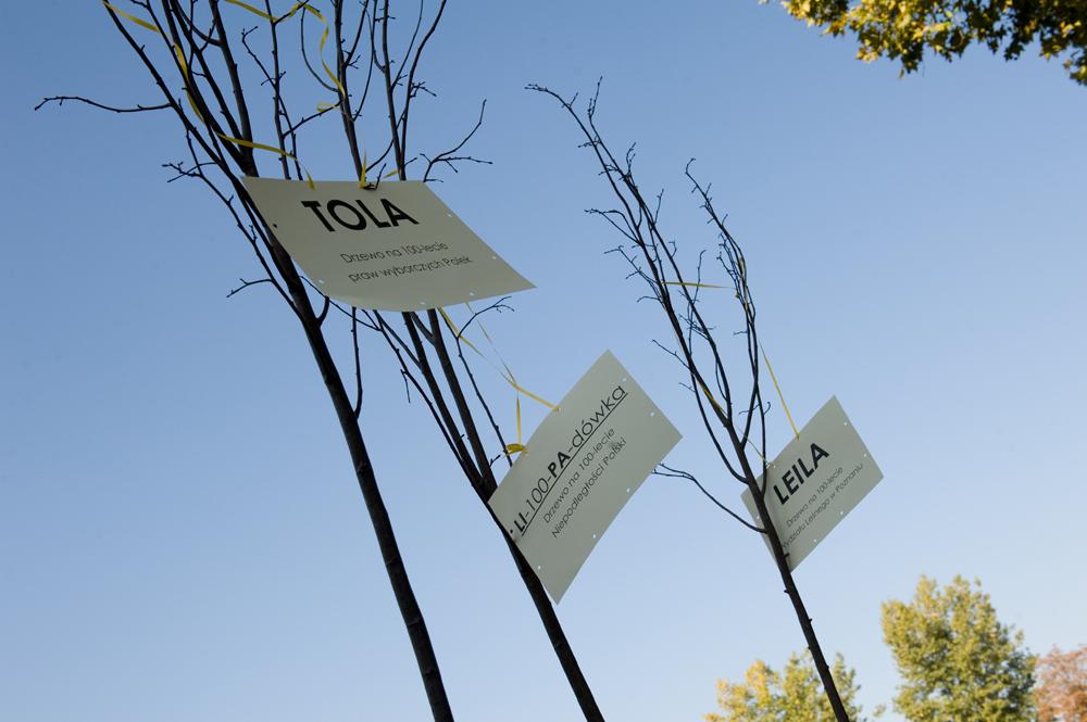 lo12_eactive_pozycjonowanie_drzew_01