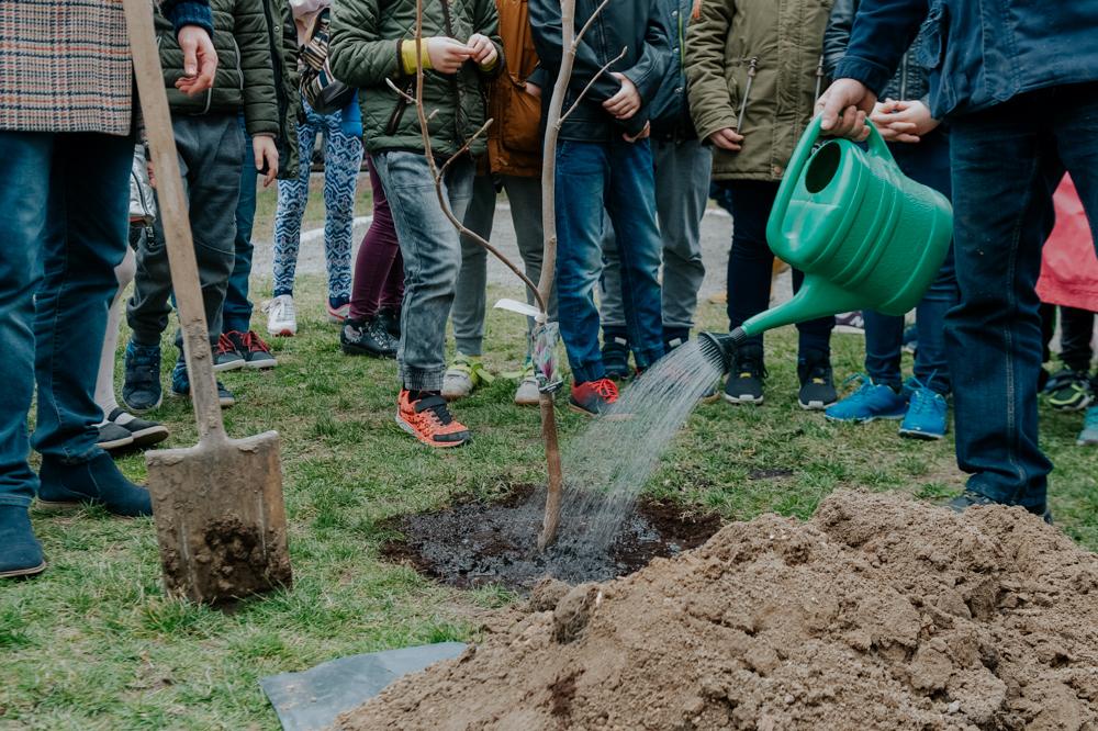 akcja-sadzenie-drzew-olawa-EACTIVE-20160821-5
